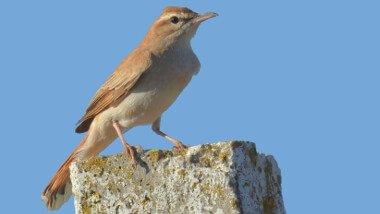 Western Doñana Birdwatching Daytrip