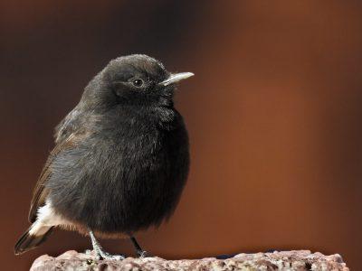 Top 10 Aves de las Sierras de Grazalema & Ronda