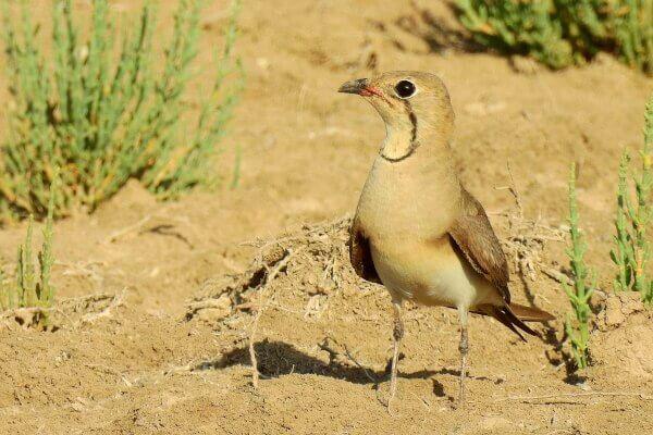 Observación de aves en el Brazo del Este