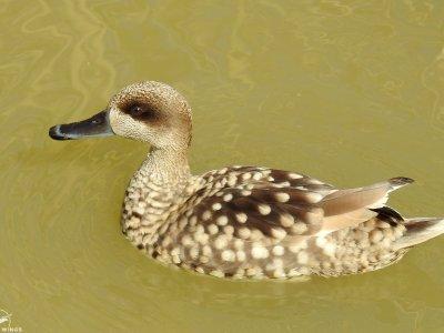 Top 10 de las aves de Doñana
