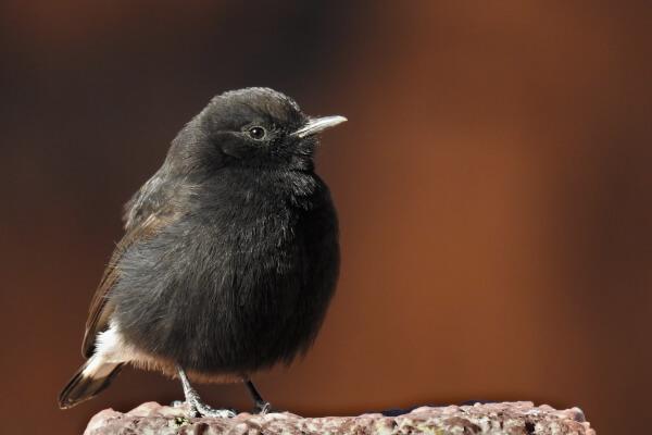 Observación de aves en las Sierras de Grazalema y Ronda