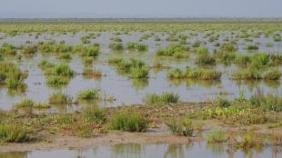 Trebujena Marshlands