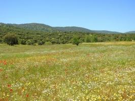 Primavera en la Sierra Norte