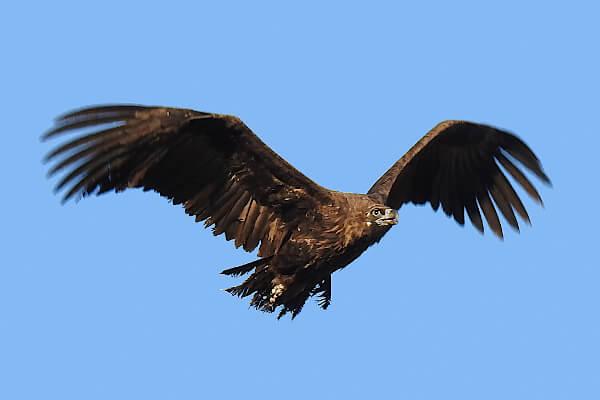 Observación de aves en la Sierra Norte de Sevilla