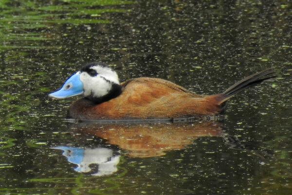 Observación de aves en Doñana Sur