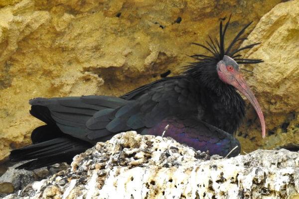 Observación de aves en el Estrecho de Gibraltar