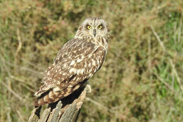 Excursiones ornitológicas a medida