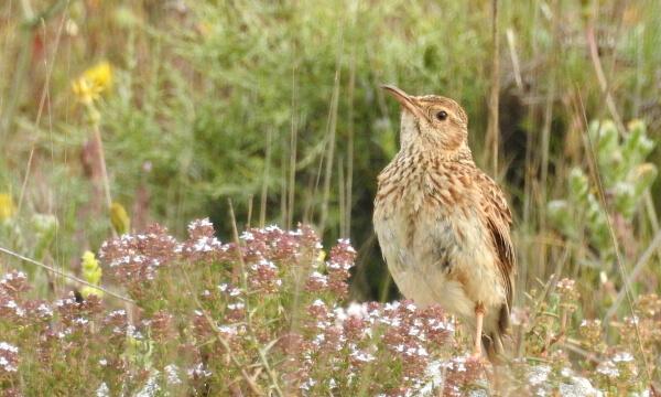 Tour ornitológico a medida